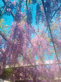 花の写真・画像素材[486896]