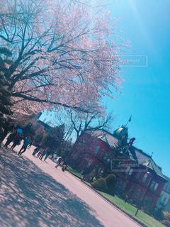 春の写真・画像素材[486902]