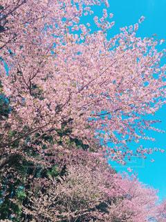 春の写真・画像素材[486903]