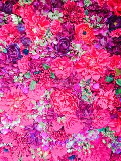 近くの花のアップの写真・画像素材[933095]
