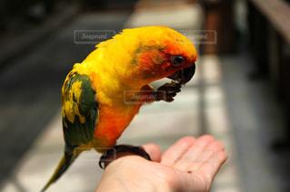 鳥の写真・画像素材[574701]