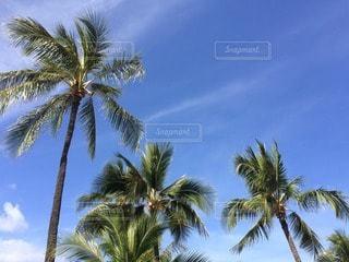 ハワイの写真・画像素材[16736]