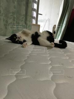 猫の写真・画像素材[487951]