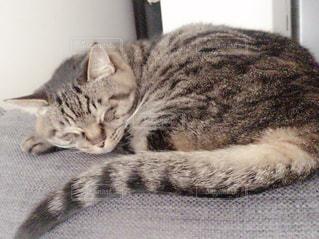猫の写真・画像素材[488113]