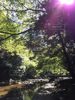 養老渓谷の木漏れ日の写真・画像素材[736378]