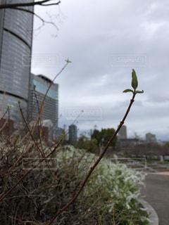近くの木のアップの写真・画像素材[1084242]