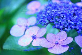 花の写真・画像素材[601432]