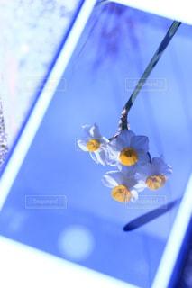 iPhoneの画面に入り込んだ花の写真・画像素材[1045148]