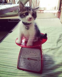 子猫の写真・画像素材[488889]