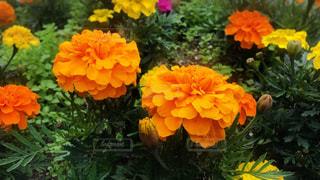 #花の写真・画像素材[566023]