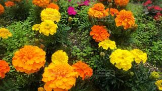 #花の写真・画像素材[566024]