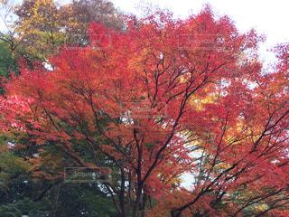 秋の写真・画像素材[489599]