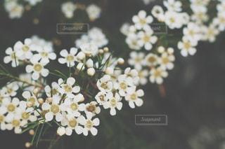 近くの花のアップの写真・画像素材[797624]