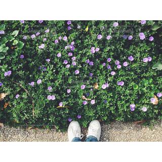 近くのフラワー ガーデンの写真・画像素材[1166304]