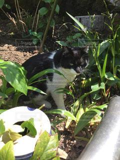 猫の写真・画像素材[489204]