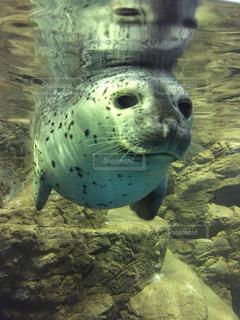 水族館の写真・画像素材[489232]