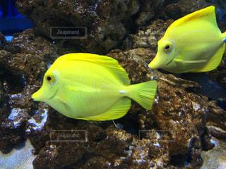 魚の写真・画像素材[489238]