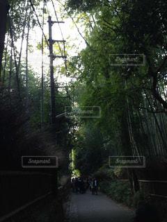 京都の写真・画像素材[489322]