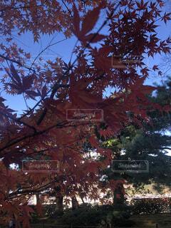 大きな木の写真・画像素材[4375026]