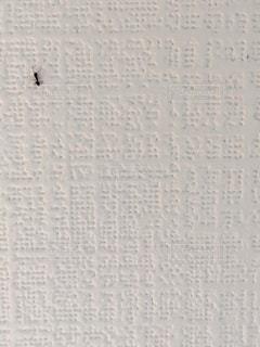 虫の写真・画像素材[550228]
