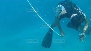 水中貝殻取るダイバーの写真・画像素材[1239896]