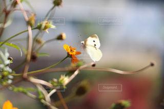 花の写真・画像素材[504670]