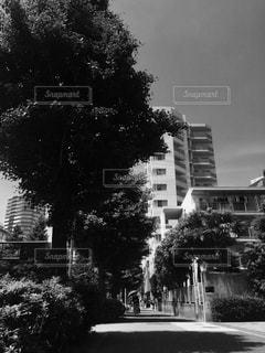 空の写真・画像素材[504675]