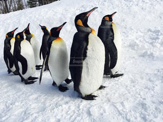 No.492593 ペンギン