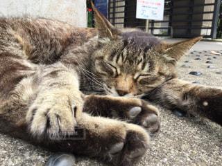 猫の写真・画像素材[507571]