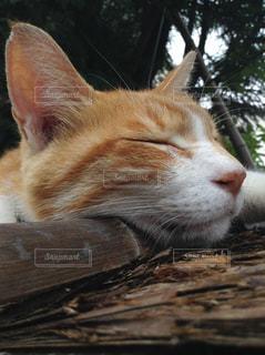猫の写真・画像素材[507574]