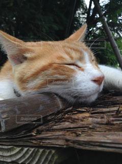 猫の写真・画像素材[507576]