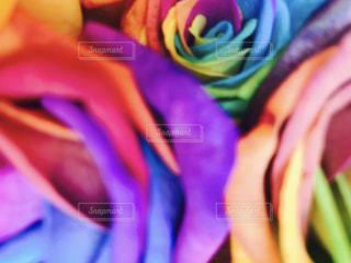 近くの花のアップ - No.742682