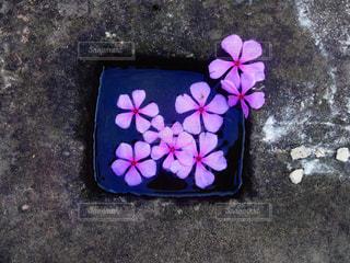 近くの花のアップ - No.815047