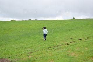 芝生の写真・画像素材[610322]