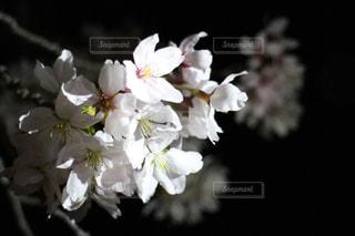 花の写真・画像素材[491381]