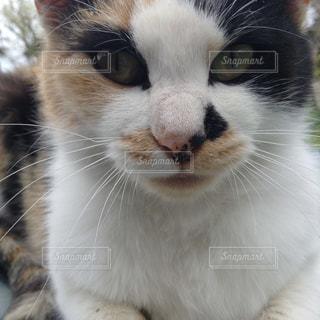 猫 - No.491479