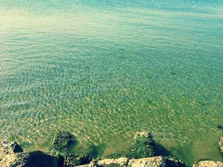 #海#夏#海水#海水浴#海水浴場#水の写真・画像素材[557340]