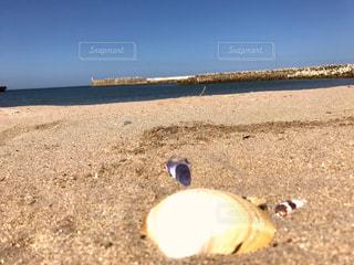 #海#夏#海水#海水浴#海水浴場#水の写真・画像素材[557498]