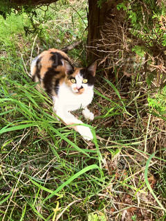 ネコ猫ねこ驚いた驚いた猫の写真・画像素材[586343]