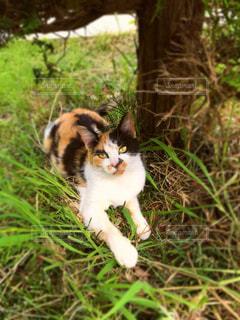 猫ねこネコペット動物不貞腐れの写真・画像素材[598599]