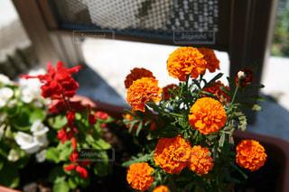 花の写真・画像素材[599522]