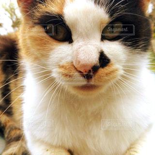 近くに猫のアップの写真・画像素材[914588]