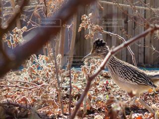 鳥の写真・画像素材[492130]