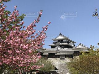 桜 - No.492031