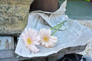 お花 - No.491617