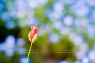 お花 - No.491638