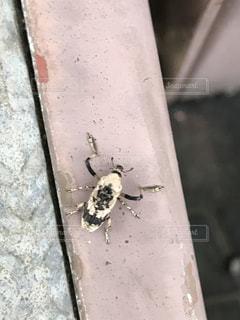 虫の写真・画像素材[518665]