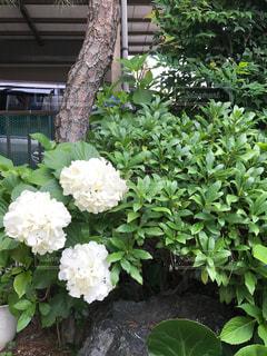 No.568143 花