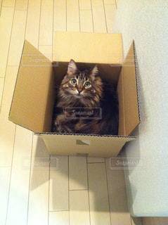 猫の写真・画像素材[562271]