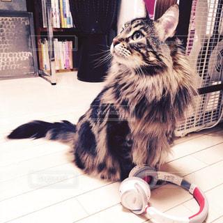 猫の写真・画像素材[563156]